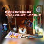 武蔵小金井のタバコ屋さんの看板犬・シバくんに会ってきた人