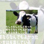 お昼どきだから牛が咀嚼してるところを見ると励みになりますね