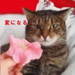 頭に花を乗せられた猫さん、変になる