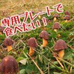陶芸家・奥田大器さん作の「きのこの山」「たけのこの里」専用プレートが欲しくなる!