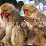 とある動物園で猫が猿のサービスを受ける