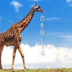 キリンの首を長くパンダを白黒にカンガルーにポケットを