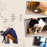 「岩合光昭の世界ネコ歩き」の出演者 by Wikipedia