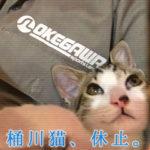 「桶川猫」がTwitter休止 客の暴言やマナー悪化が原因