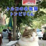 トルコの名物猫トンビリくん死去→彫刻制作でイスタンブールのハチ公になりそう