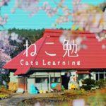 猫の通信講座「ユーニャン」の「ねこ勉~Cats Learning~」なんか観たら泣くに決まってる