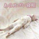 あのスゴい寝相の猫さん、目撃情報続々と集まる!