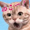 【猫さん】「ぬこー!」からの「ボヘミアン・ラプソディ」