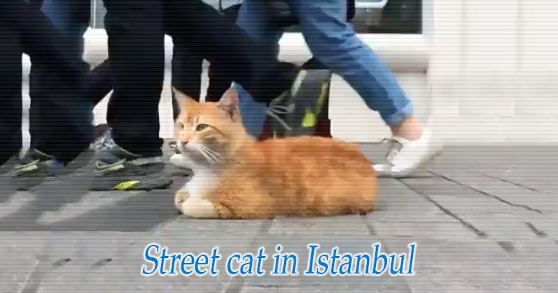 イスタンブールの街猫