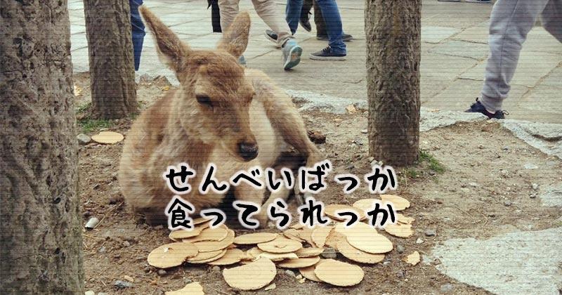 「奈良のシカ」保護啓発ポスターコンクール入賞作品が見せる強い意志