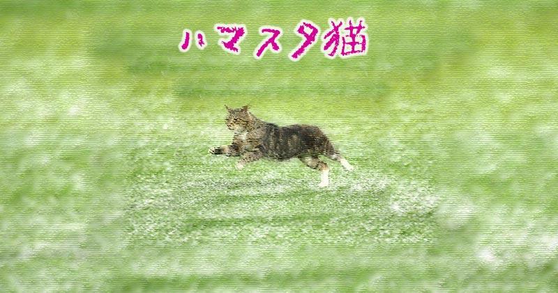 【ハマスタ猫】スポーツ紙カメラマンたちの写真が素晴らしい