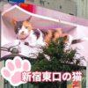 新宿東口の猫はほんとスゴいな! 特に寝ててビクッとなるのいいね!