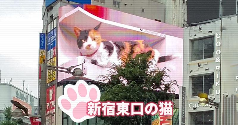 新宿東口の猫はほんとスゴいな!