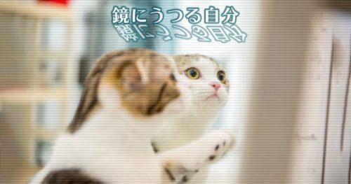 猫さん、鏡にうつる自分が不思議そう→意外な結末