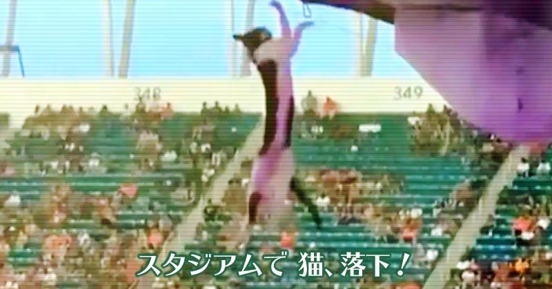 スタジアム上階から落下した絶体絶命の猫を星条旗で受けとめる